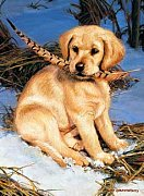 A Puppy With Feather