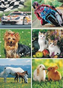 Animals and Cars  - 1