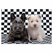Chess Terriers