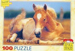 Foal on the Meadow