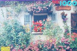 Garden behind the House