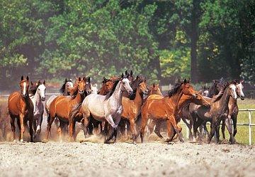 Herd of Horses - 1