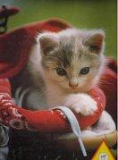 Kitten in the Boot