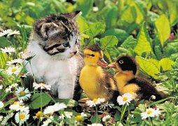 Litte Friends