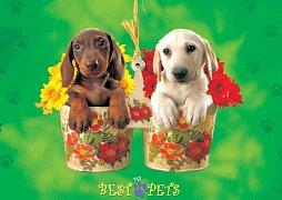 My Best Pets