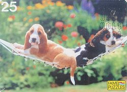 Puppies in the Hammock