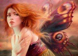 Wings of the Butterflie