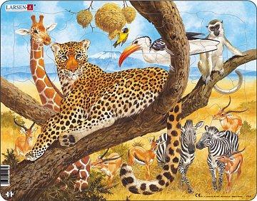 Animals in Africa - 1