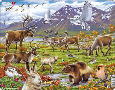 Animals in the steppe