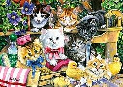 Bathtime Kittens