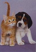 Beagle and Kitten