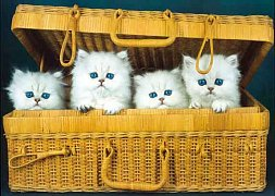 Cats in Box