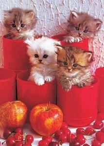 Chery Cats - 1