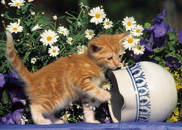 Curious Kitten - 1