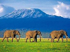 Elephants on the walk