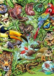 Fauna and Flora - 1