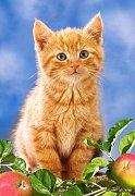 Kitten witch Apples