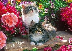 Kittens in the Garden