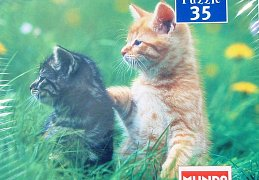 Kittens on the Meadow