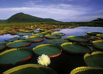 Lake Victoria - 1