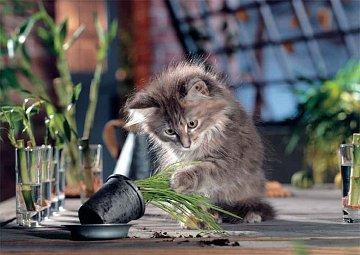 Naughty cats - 1