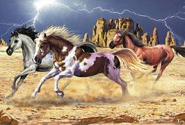 Pferde im Canyon