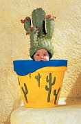 Pot and the Cactus