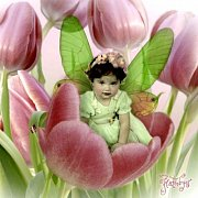 Pretty in Pink Tulips