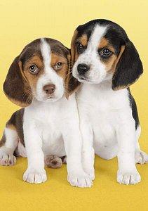 Puppies - 1