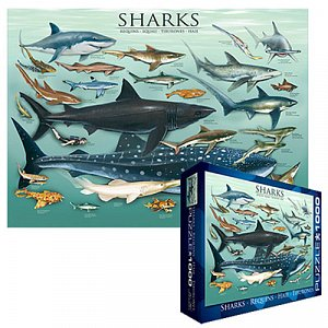 Sharks - 1