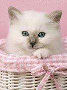Sweet eyes