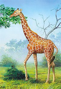 The Giraffe - 1