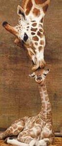 The Giraffes - 1
