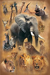 The World of Wild Animals - 1