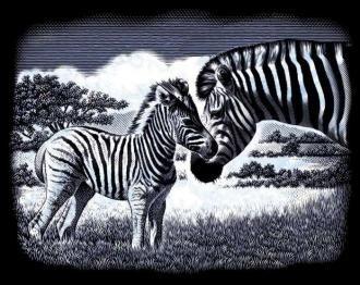 The Zebra - 1