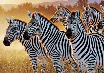 The Zebras - 1