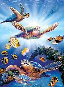 Turtles - 1