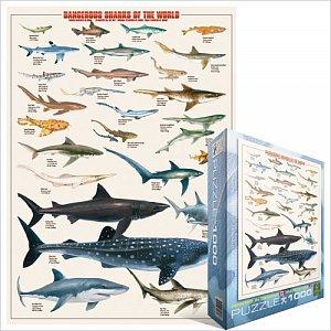 Žraloci - 1